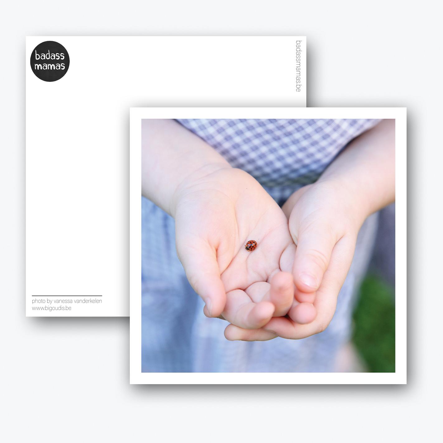 carte postale coccinelle
